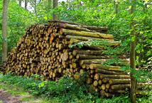 El aprovechamiento del bosque francés | Travaux Publiés | Travaux ...