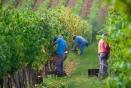La saisonnalité dans les filières agricoles, halieutiques et agroalimentaires