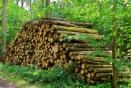 La valorisation de la forêt française