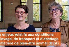 """Le CESE a adopté son avis """"Les enjeux relatifs aux conditions d'élevage, de transport et d'abattage en matière de bien-être animal (BEA)"""""""
