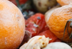 Les préconisations du CESE reprises dans la proposition de loi visant à lutter contre le gaspillage alimentaire