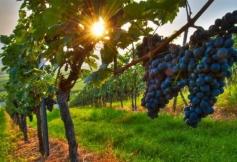 Des propositions médiatisées de l'avis «La saisonnalité dans les filières agricoles, halieutiques et agroalimentaires»