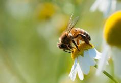 Le bilan de la loi pour la reconquête de la biodiversité, de la nature et des paysages