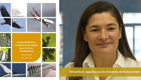 Le CESE a rendu ses préconisations sur le biomimétisme
