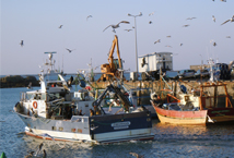 The future common fisheries policy (CFP)
